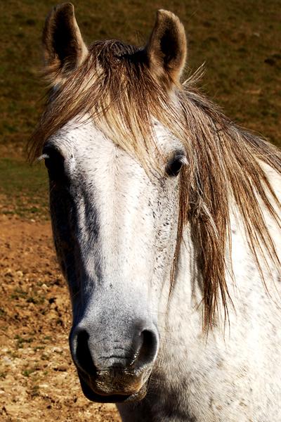 A cheval sur la bite de mon homme - 3 4